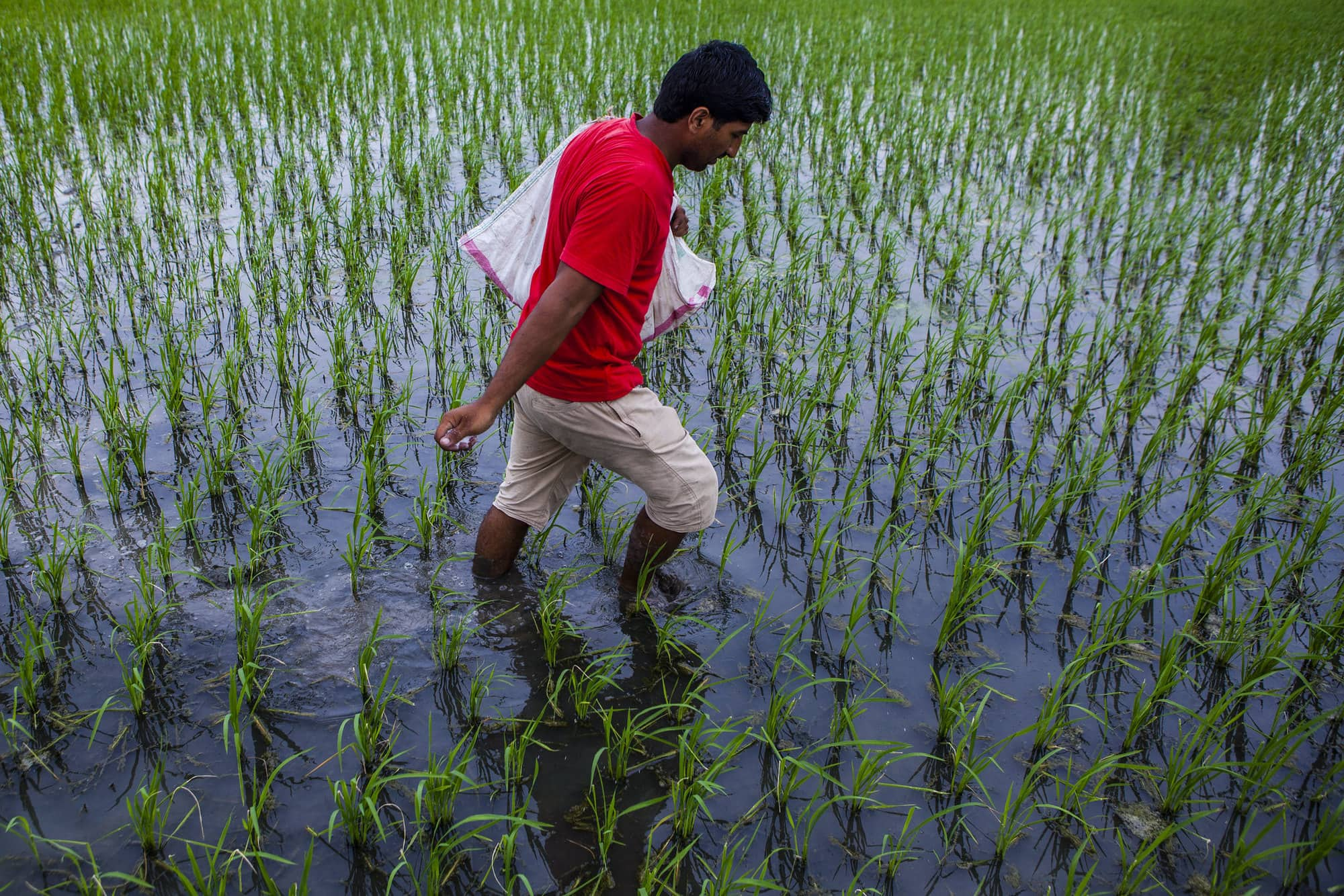 Transforming Food Systems from Greenhouse Gas Sources to Sinks (S2S)