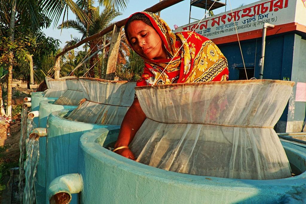 Bina Majhi runs a successful fish hatchery business with her husband in Hajipur village, Patuakhali district, Bangladesh. Photo: AWM Anisuzzaman/WorldFish.