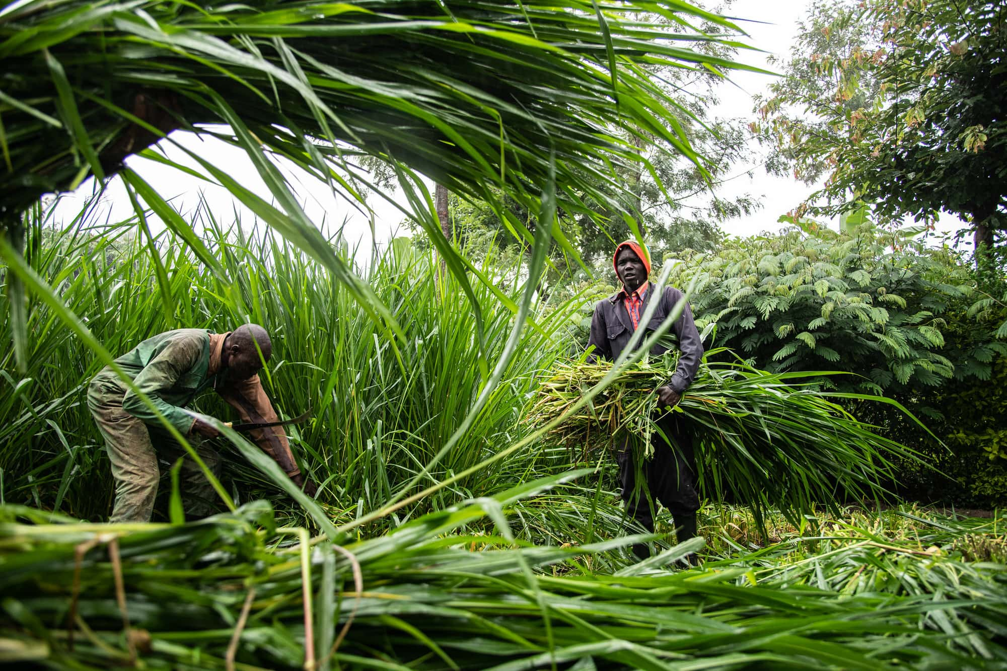 21 Ukama Ustawi (U2) Water Secure and Climate Resilient Agricultural Livelihoods in East and Southern Africa