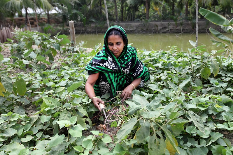A woman in her integrate aquaculture-agriculture homestead pond system in Bangladesh. Photo by M. Yousuf Tushar.