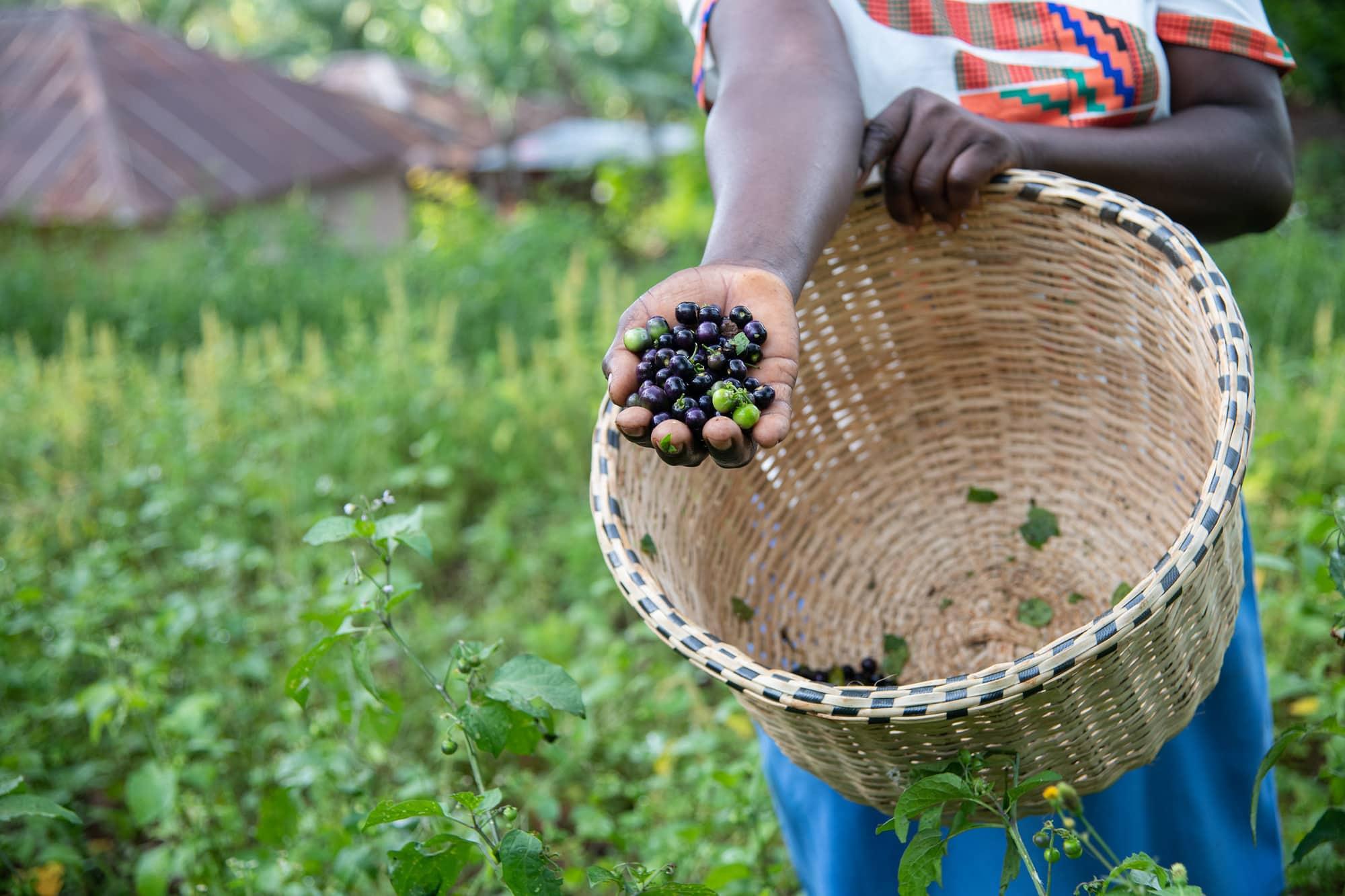 SeEdQUAL: Delivering Genetic Gains in Farmers' Fields