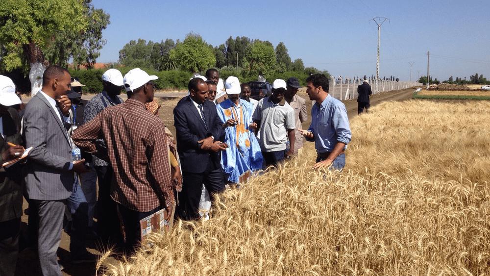 Modernizing crop breeding to safeguard tomorrow's populations (ICARDA)