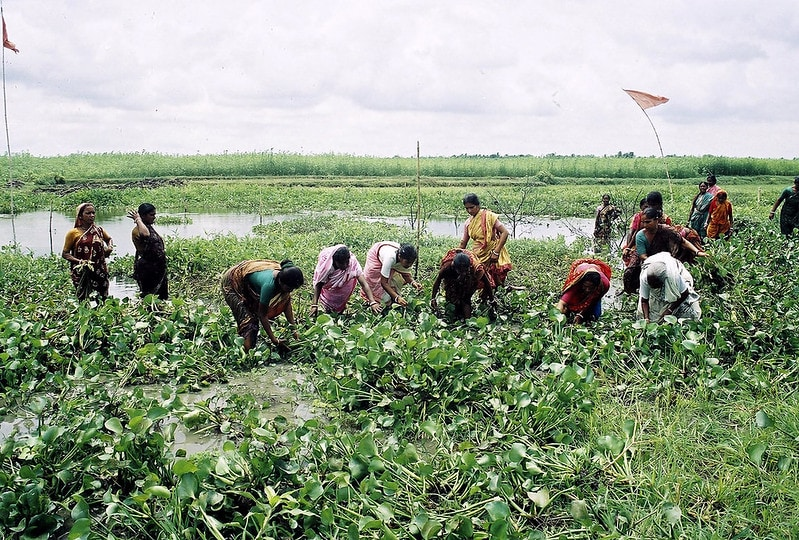 A group of women working together to cultivate fish and vegetables in a community-based fisheries management in Bangladesh. Photo by CBFM-Fem Com Bangladesh.