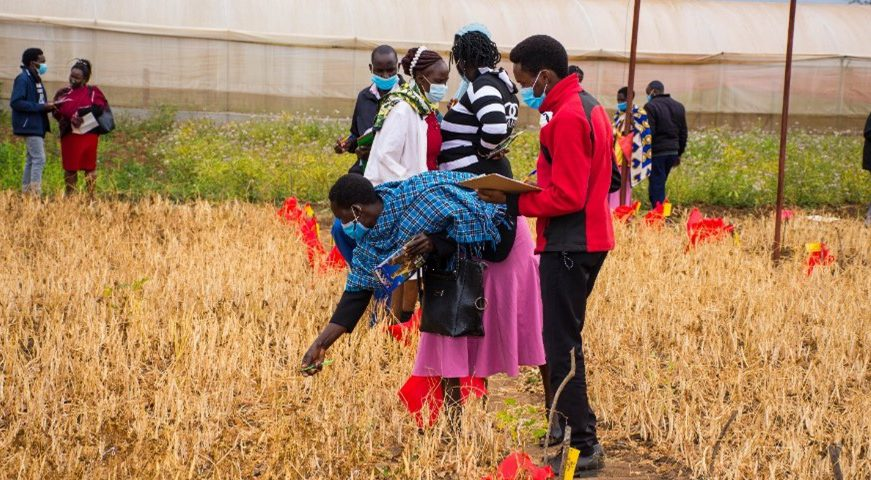 Inclusion, a key ingredient to Gender-Responsive Participatory Varietal Selection