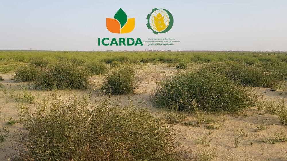 ICARDA Signs MOU with the Islamic Organization for Food Security