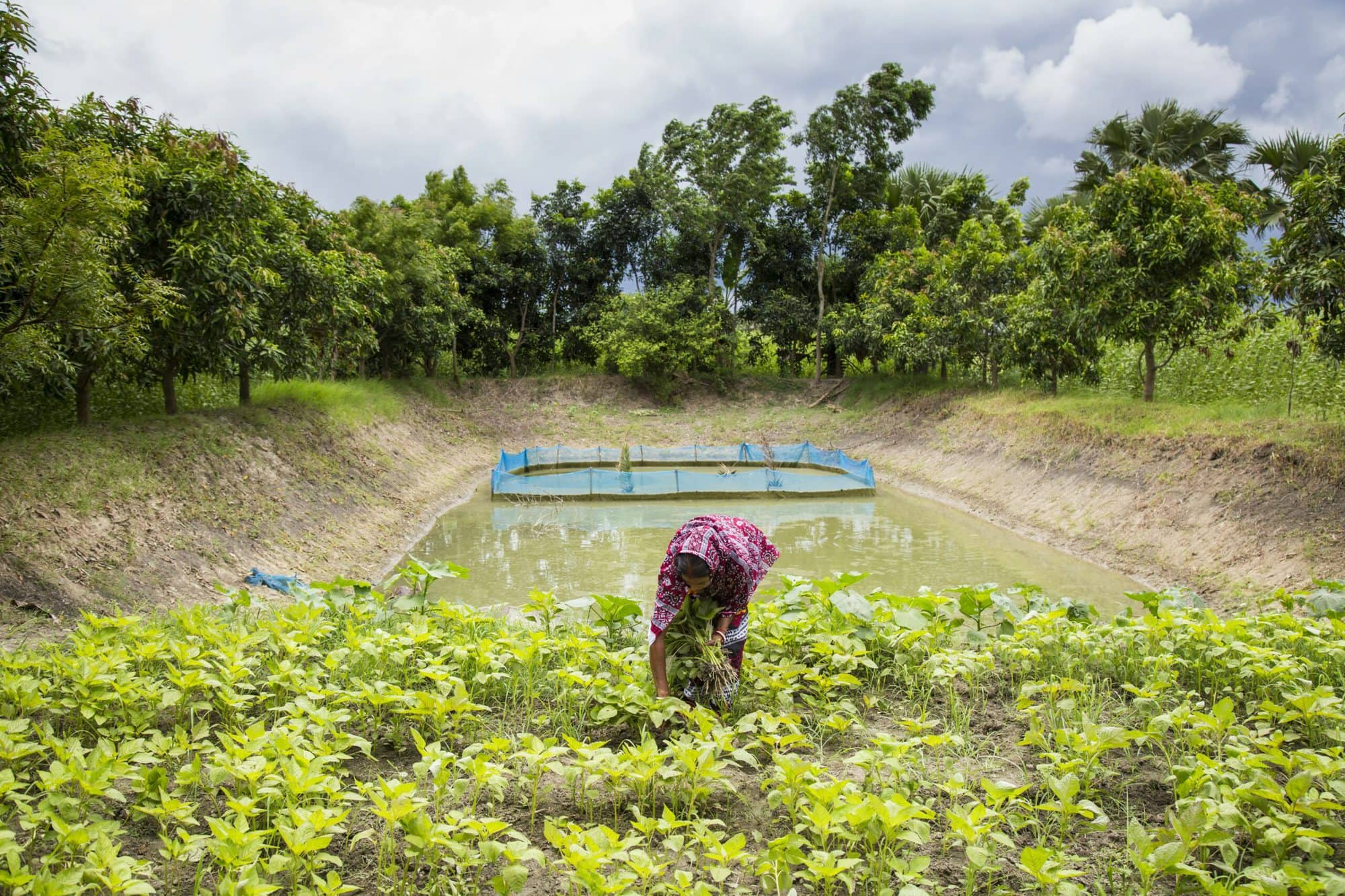 Jayanti Rai, a woman fish farmer, taking care of her vegetables garden beside the pond dike for nutrition sensitive aquaculture in Bangladesh. / Noor Alam, WorldFish