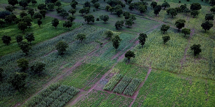 CGIAR spells out priority interventions to accelerate uptake of research to rebuild and strengthen Africa's agriculture in the face of climate change