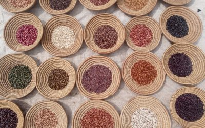 Promoting sustainable food production by upscaling best performing varieties of finger millet and bean through seed and product value chains: experiences from Hoima, Uganda