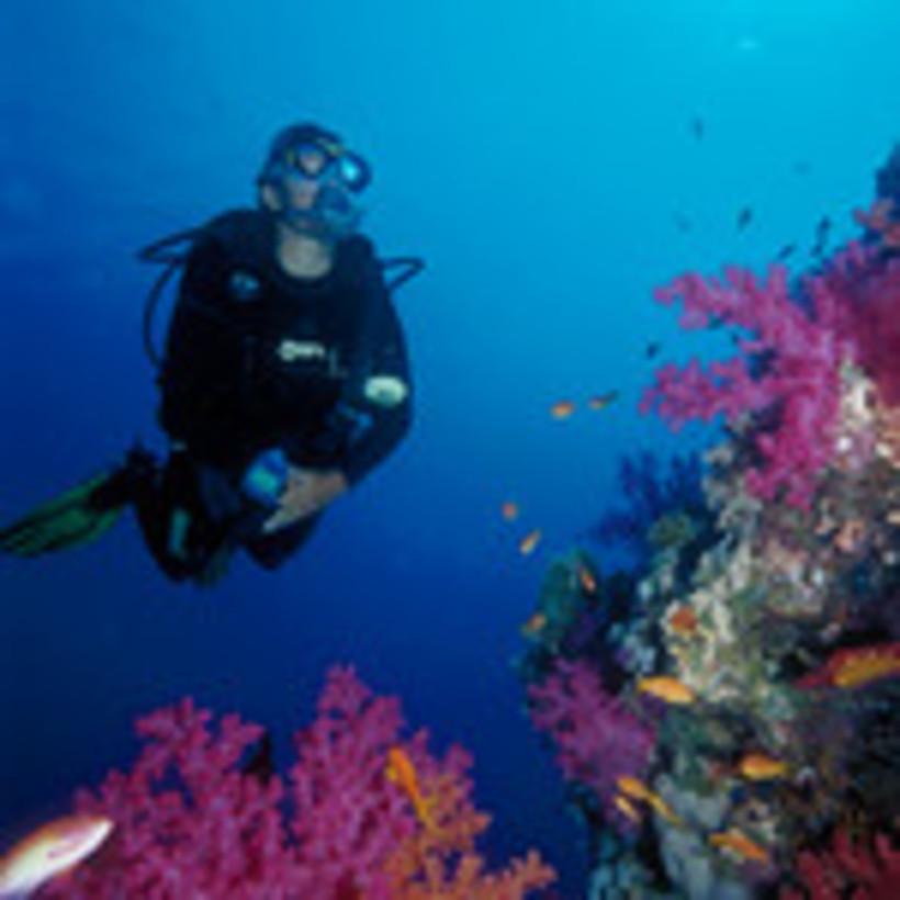 Qualifying dives