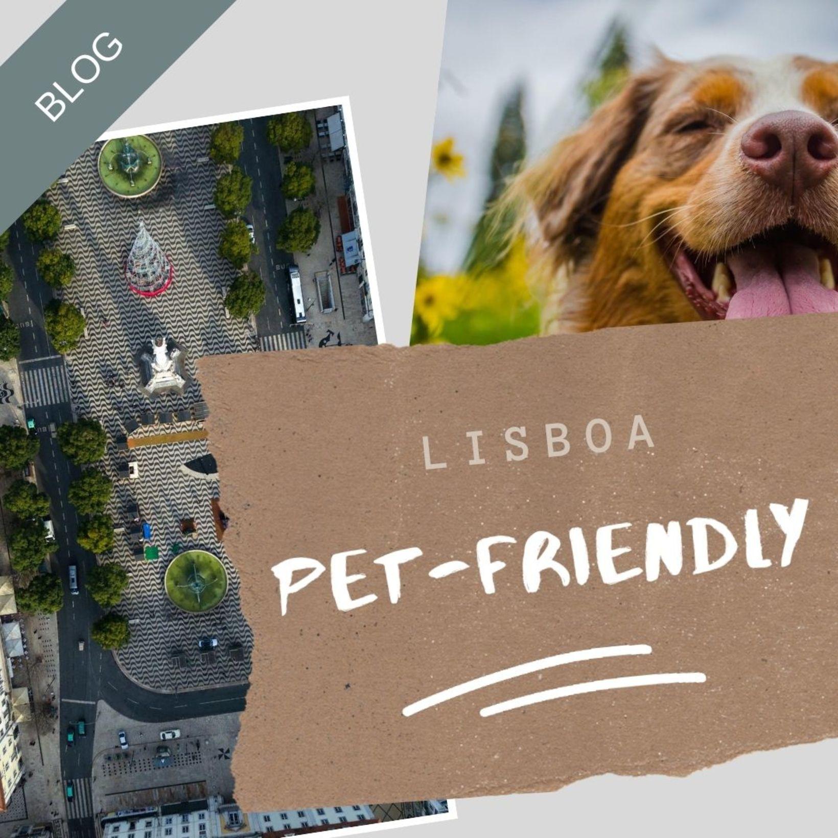 Os sítios petfriendly de Lisboa