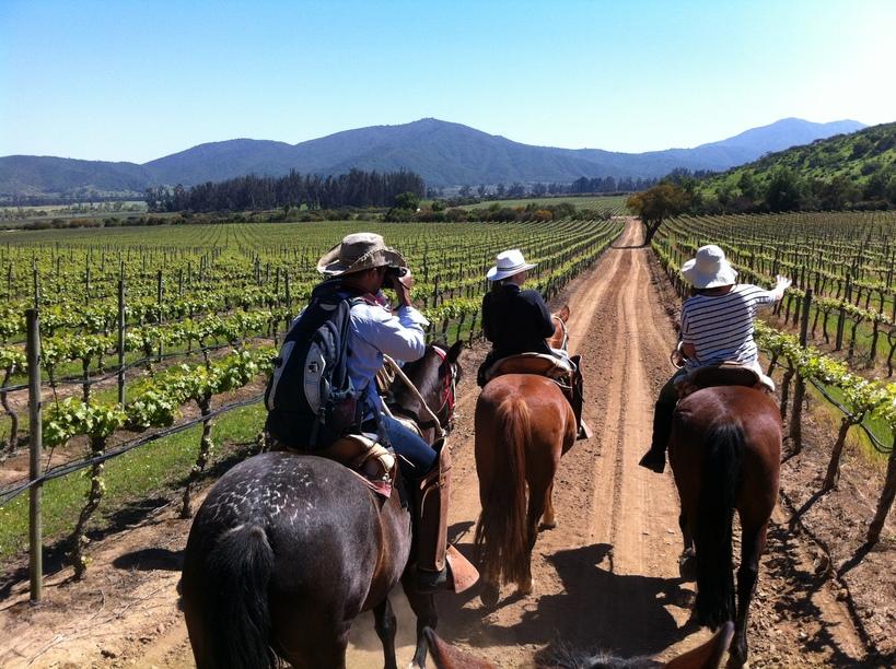 Wine Tour with horseback riding Casablanca Valley