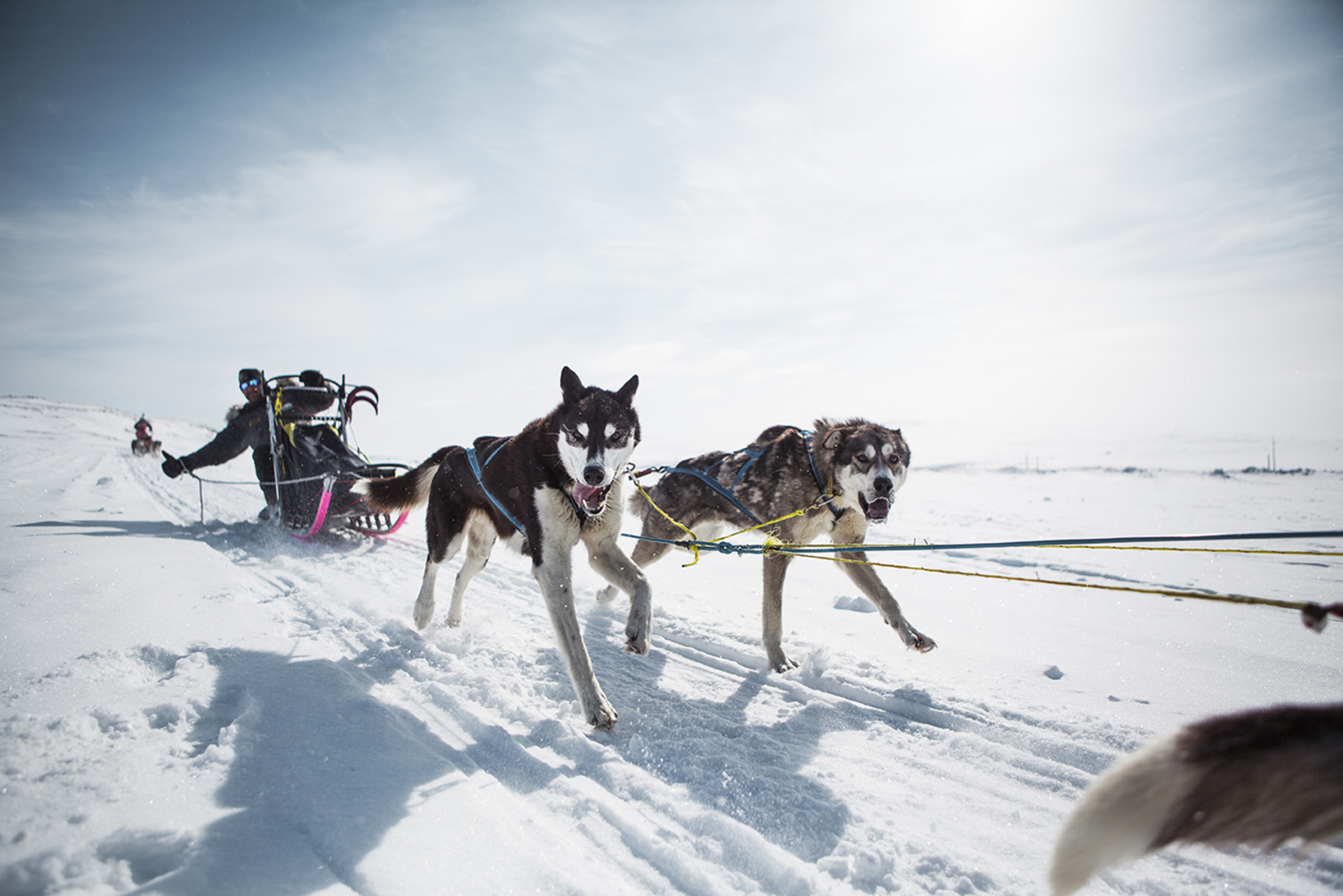 categories dog sledding norway fagerlund husky geilo