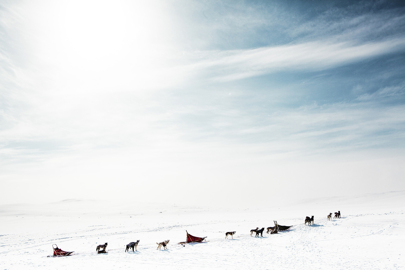 Dog sledding at Hardangervidda