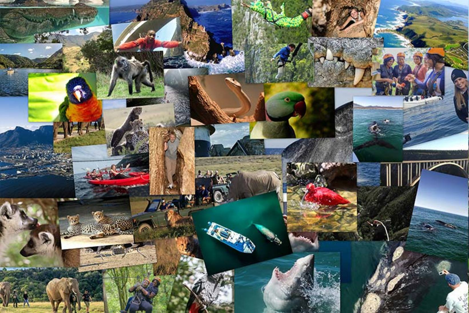 Ultimate Adventure 7 Day Cape Town and Garden Route Package