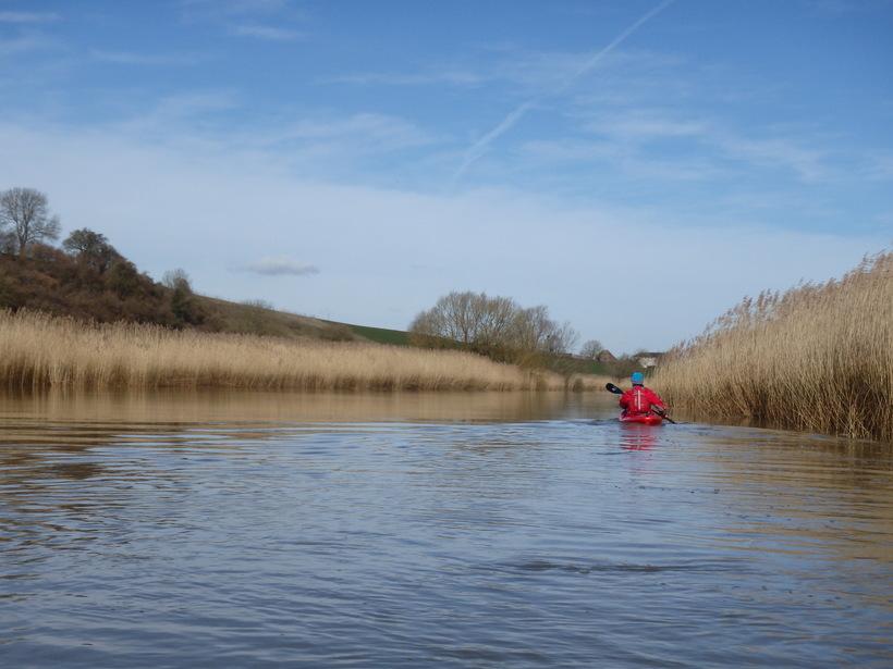 Paddling through reeds