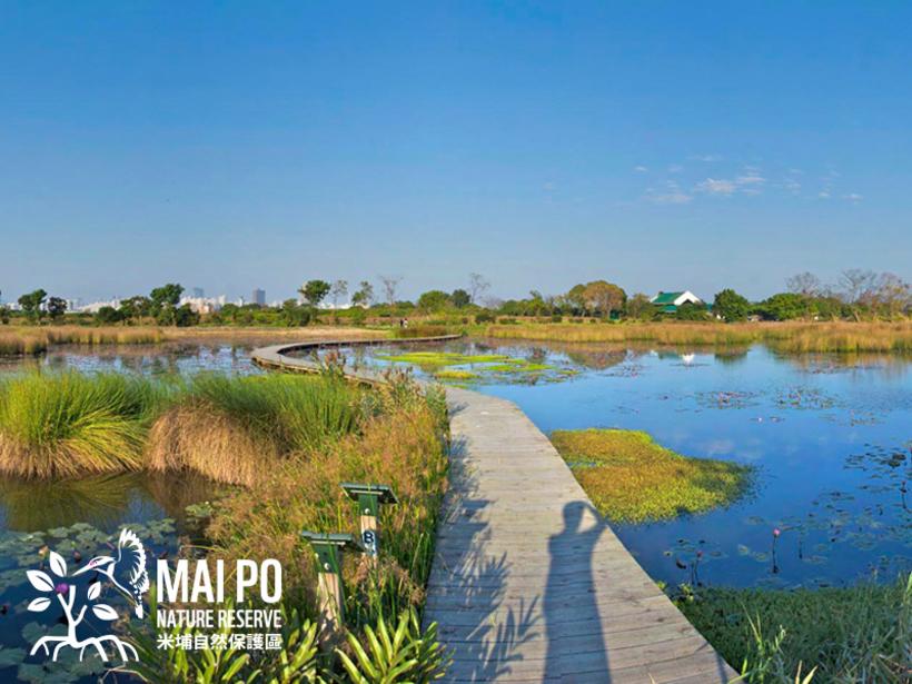 米埔 Mai Po Nature Reserve