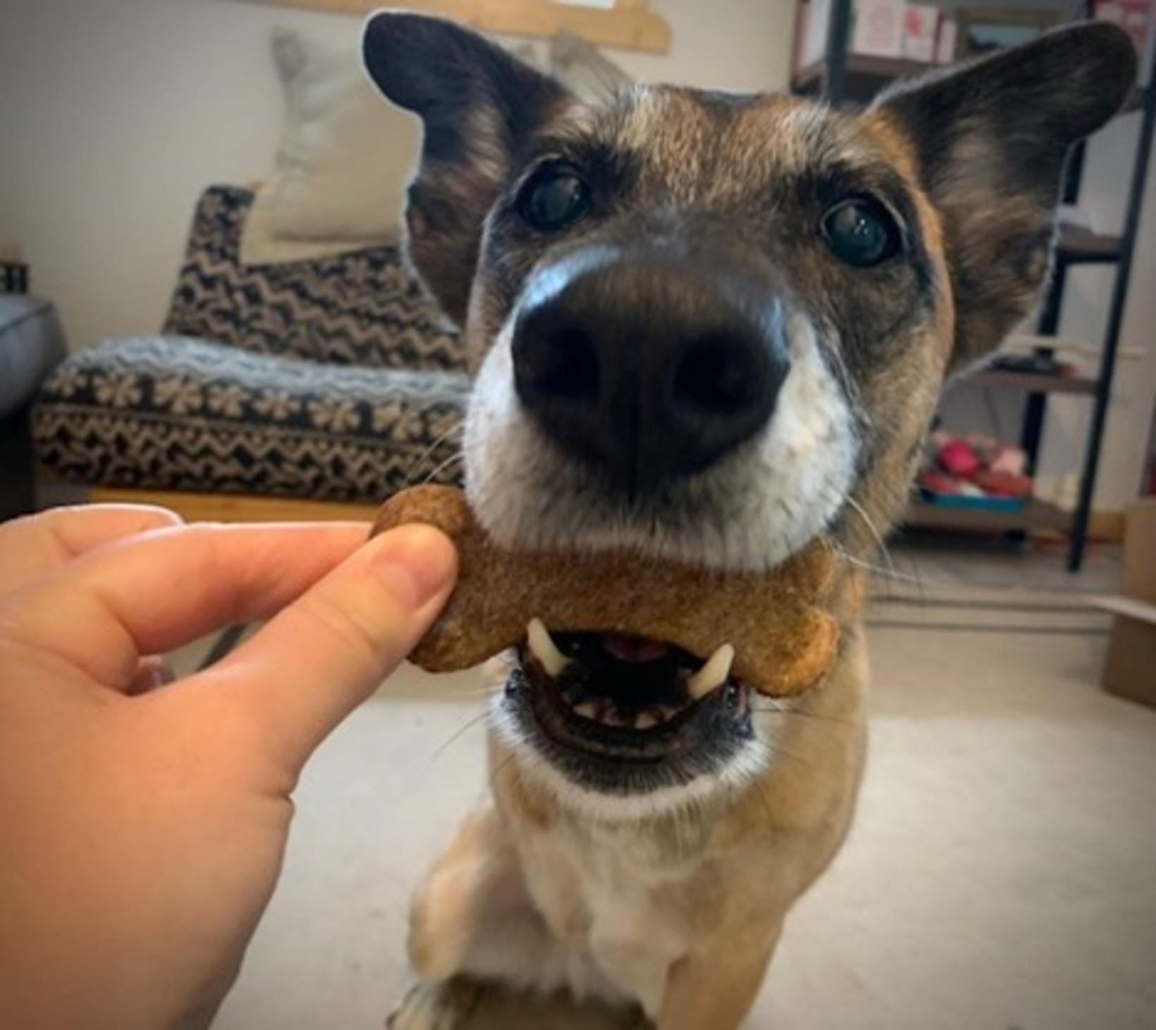 Buy Local Series: Treats for you and your canine