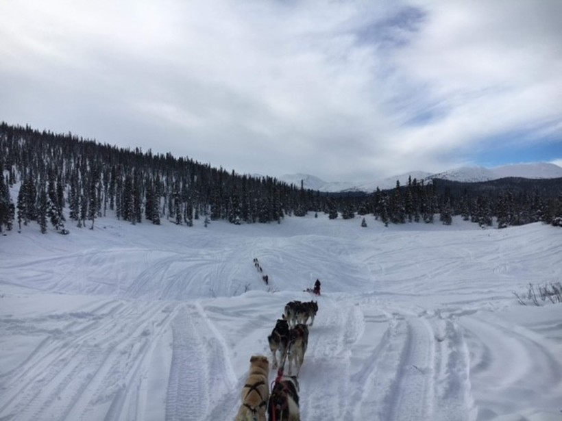 Out on one of our dog sledding adventures. Our guide Kristina coming back up, followed by me going down and then Adam's team