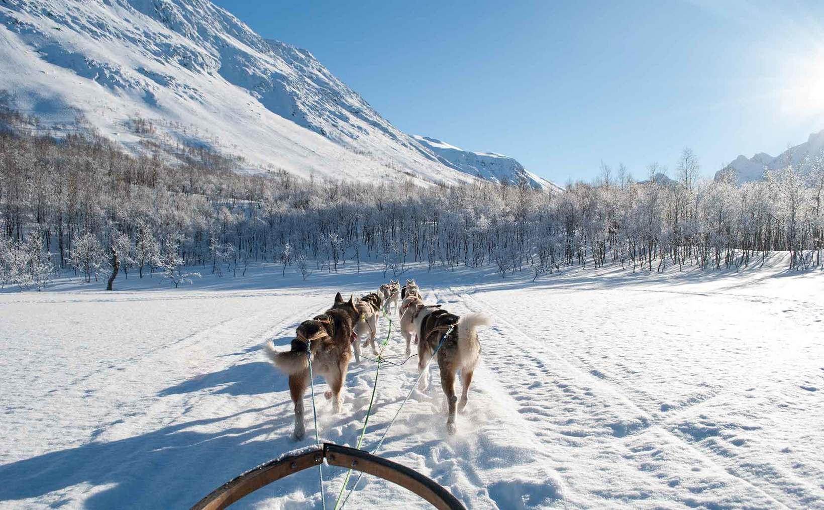 home northern light dog adventure as nordkjosbotn troms