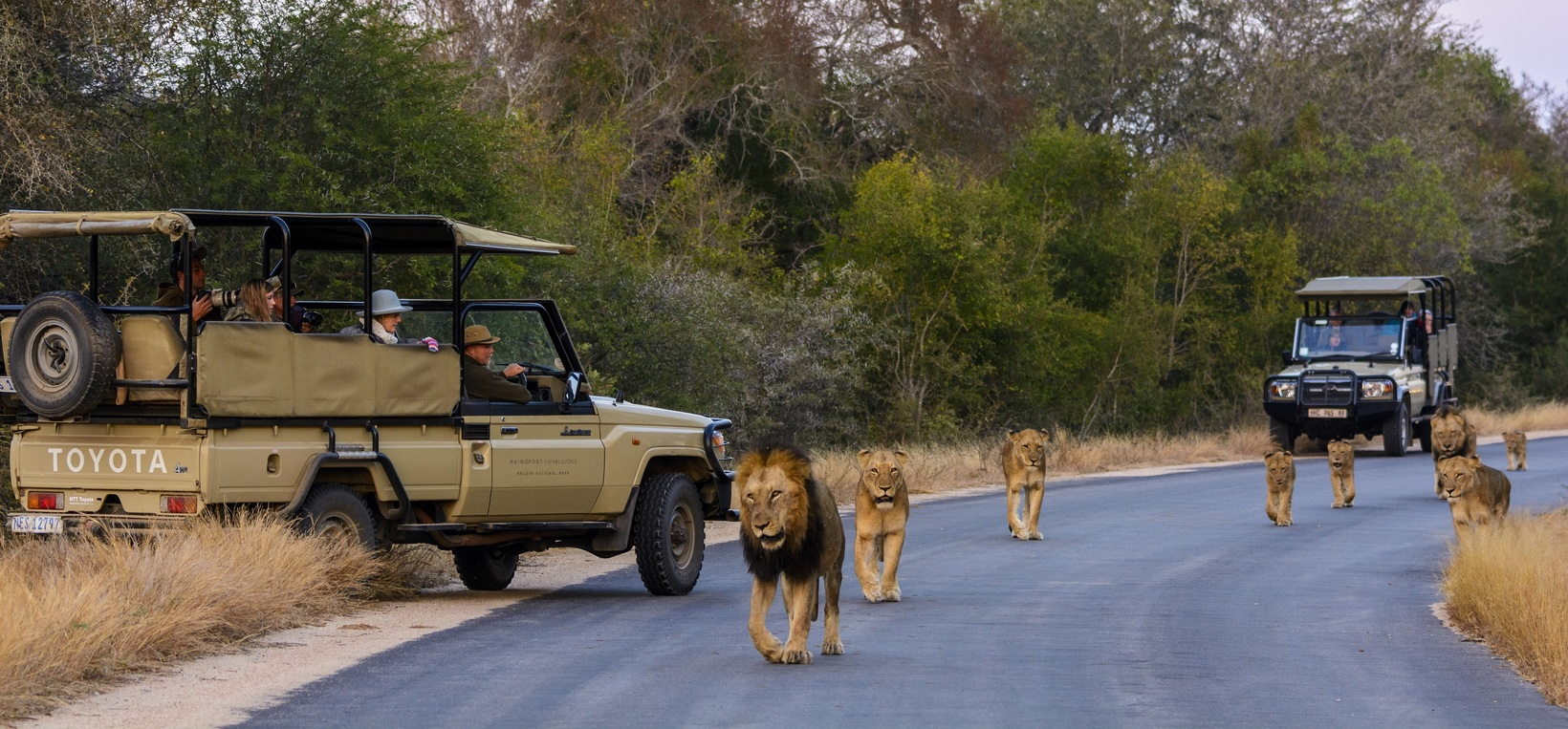 Explore The Infinite Wonders of Africa