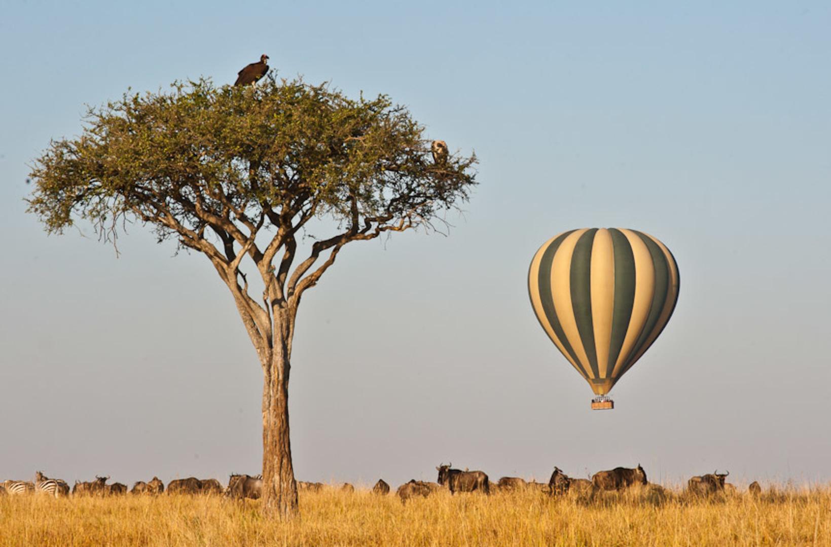 Balloon Safari & Champagne Breakfast