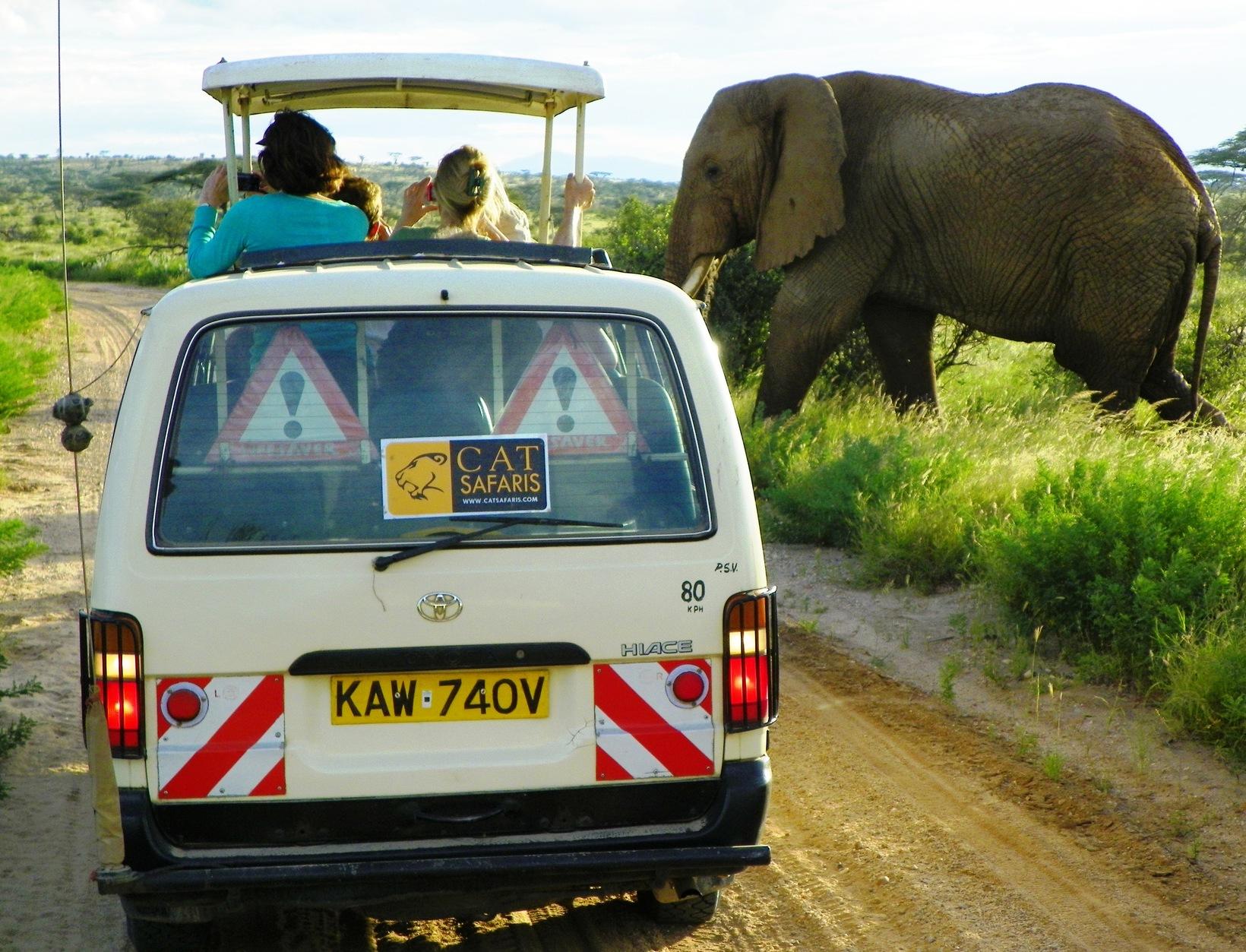 A Day on Safari