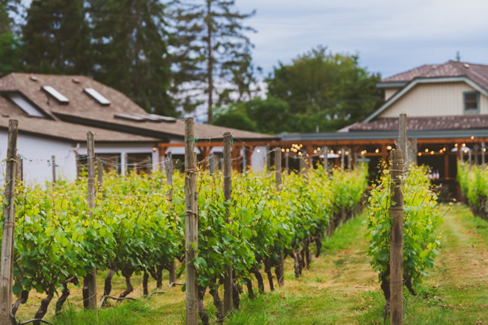 Deep Cove Winery