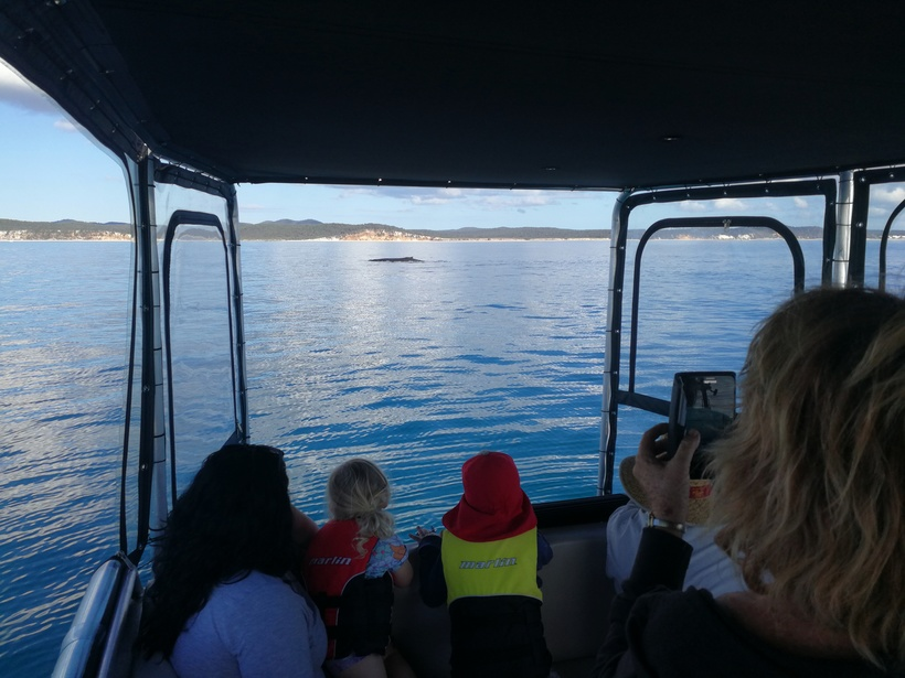 Family Whale Watching Hervey Bay