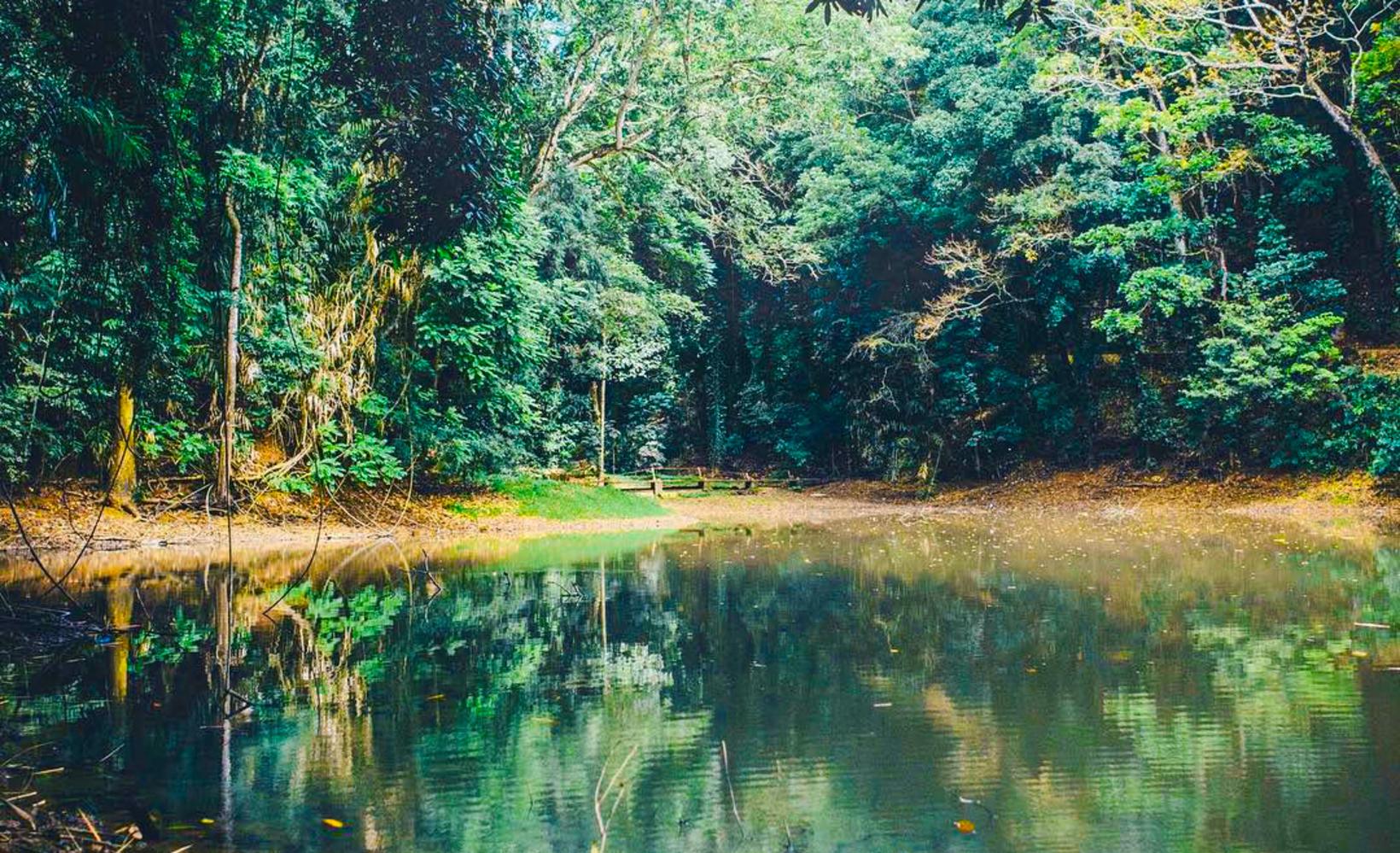 Udawatta Kele Sanctuary, Kandy