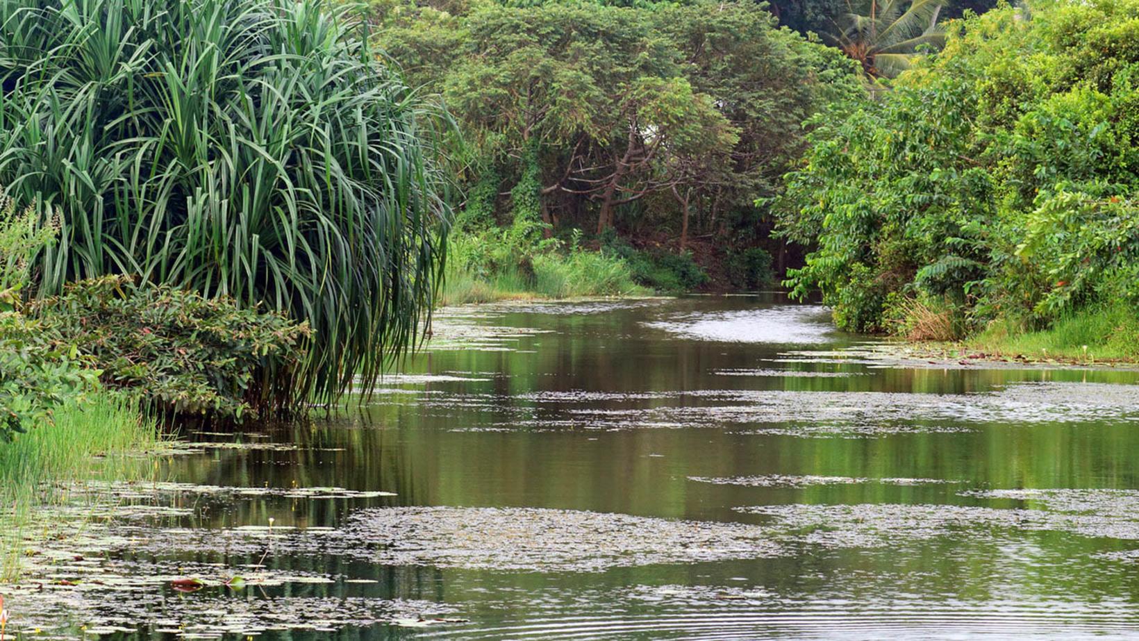Thalangama Wetlands, Colombo