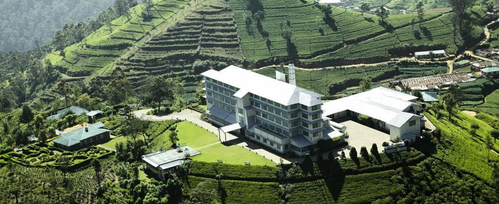 Pedro Tea Estate, Nuwara Eliya