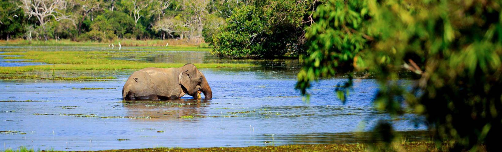 Nature & Wildlife of Sri Lanka