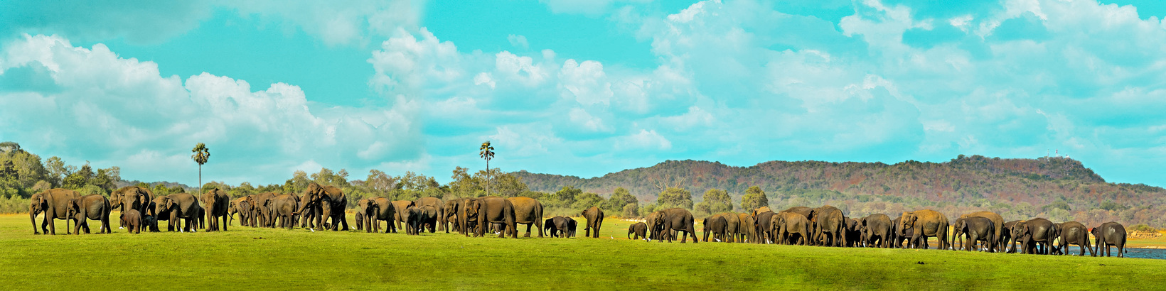 The Great Elephant Gathering of Asia