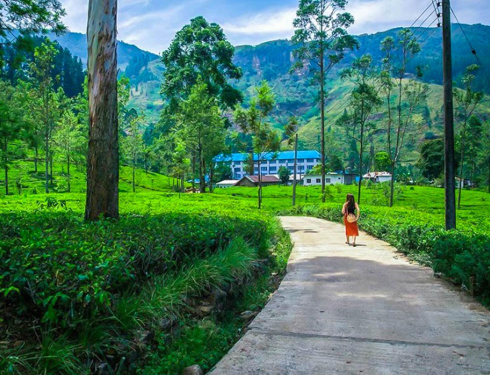 Blue field Tea Factory, Ramboda