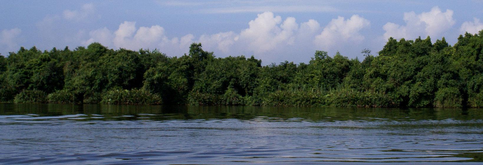 Muthurajawela Wetlands