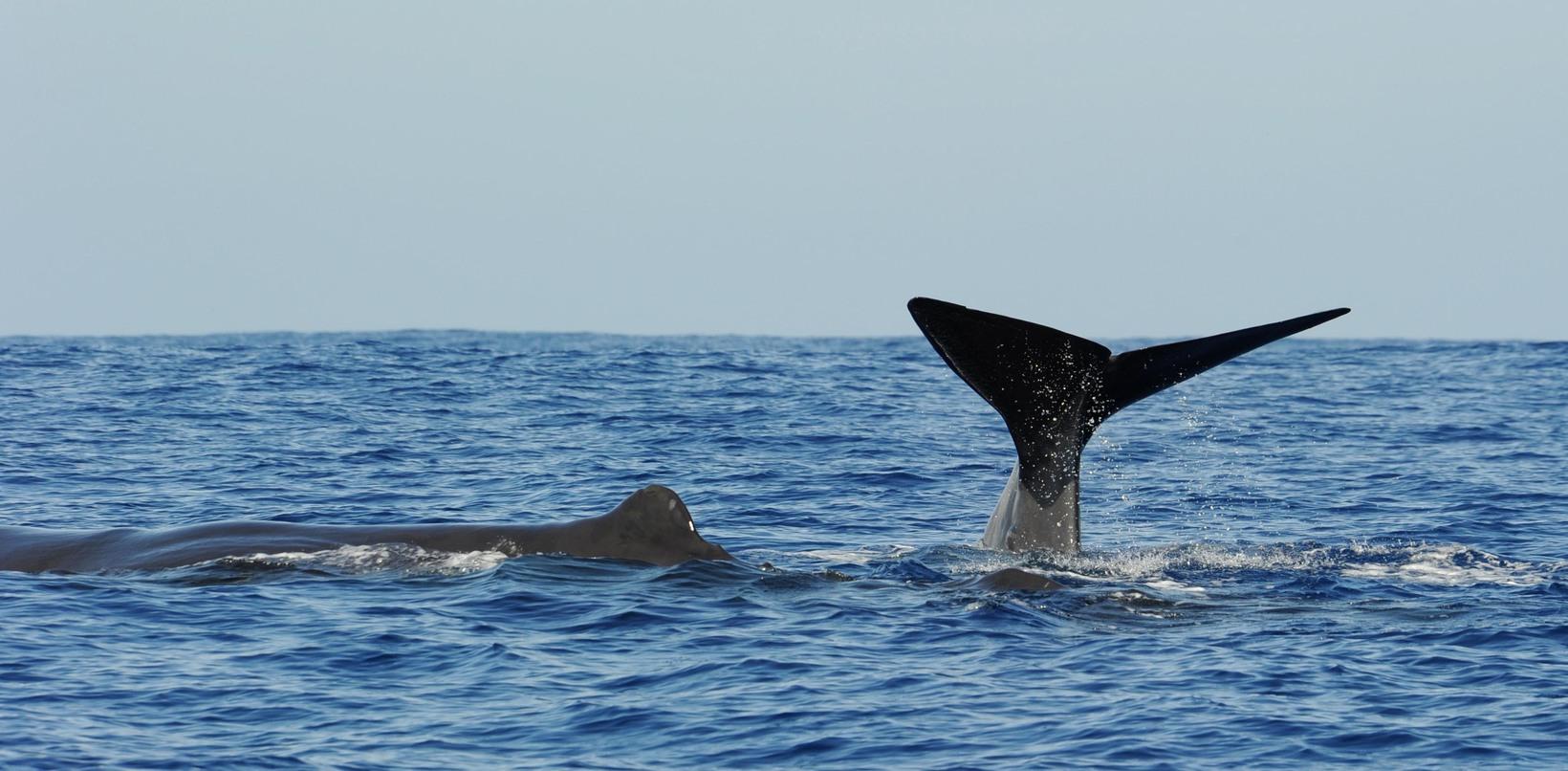 Aquatic Life in Sri Lanka