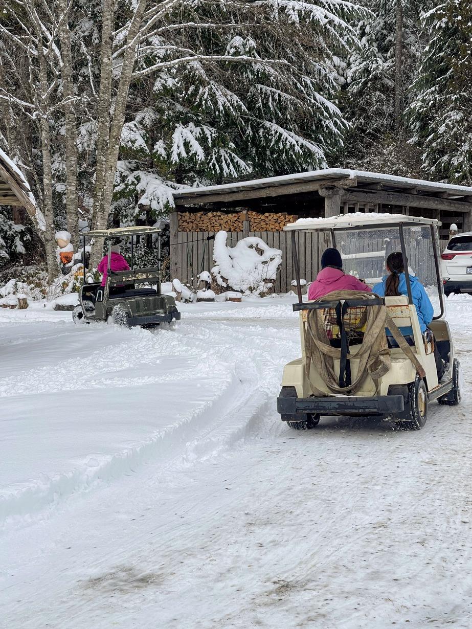 Golf Cart Racing - Mussel Beach Style