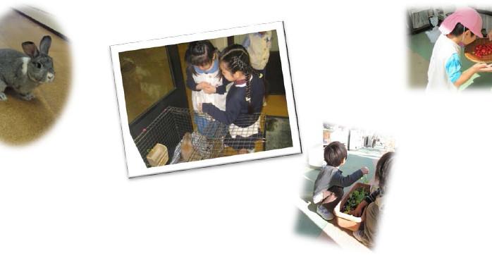 愛育幼稚園