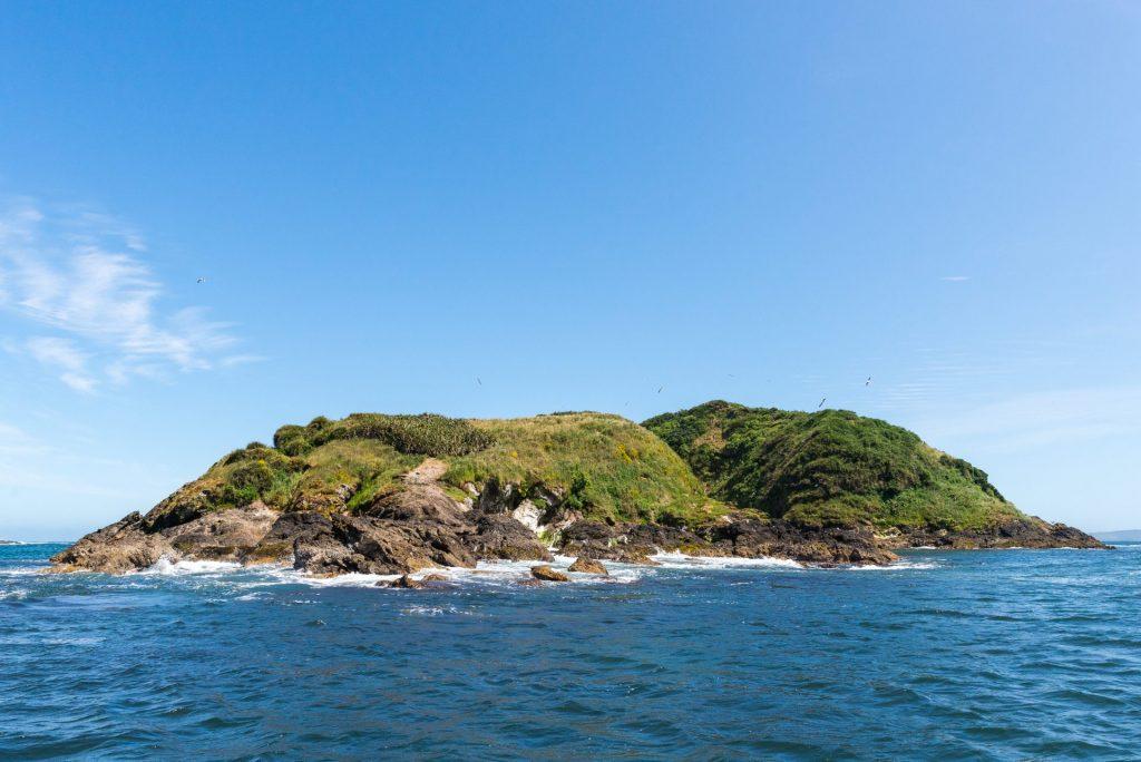 M.N. Islotes de Puñihuil