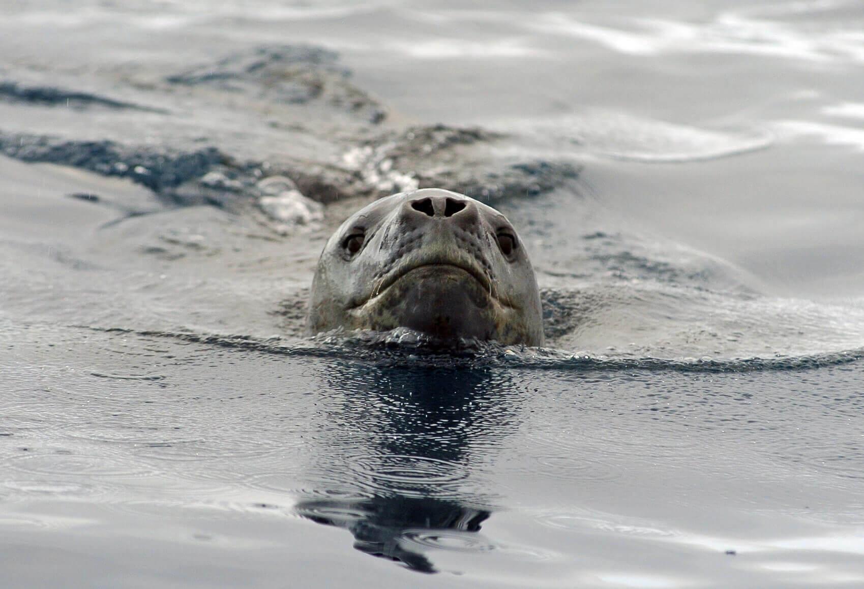 leon marino nadando
