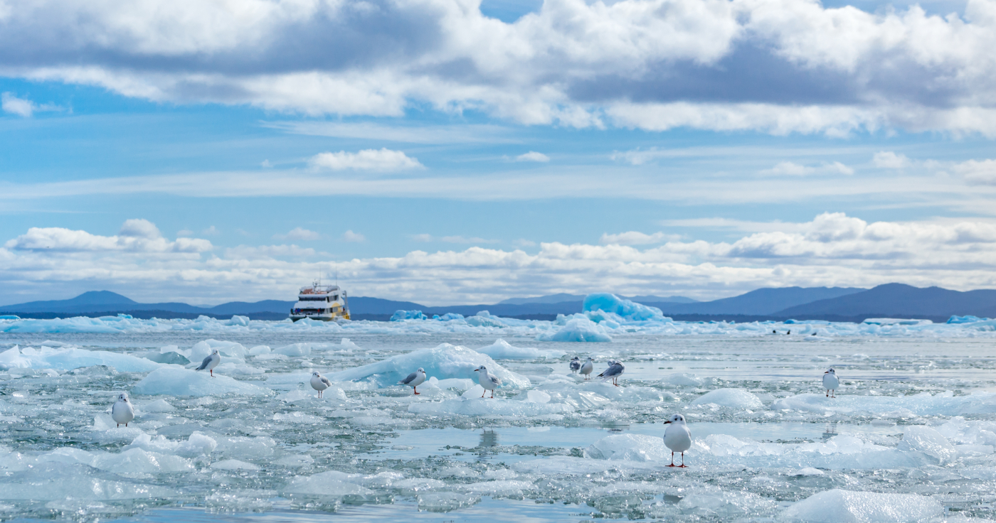 Imagen de la laguna San Rafael congelada, donde se aprecian gaviotas posadas en los hielos eternos del sur de Chile