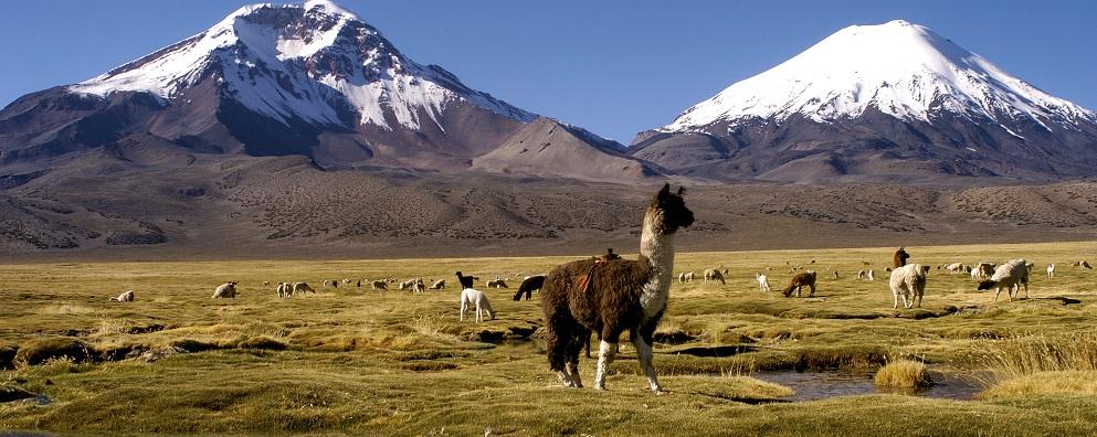 Que hacer en Arica: Visitar el valle de Azapa con su flora y fauna