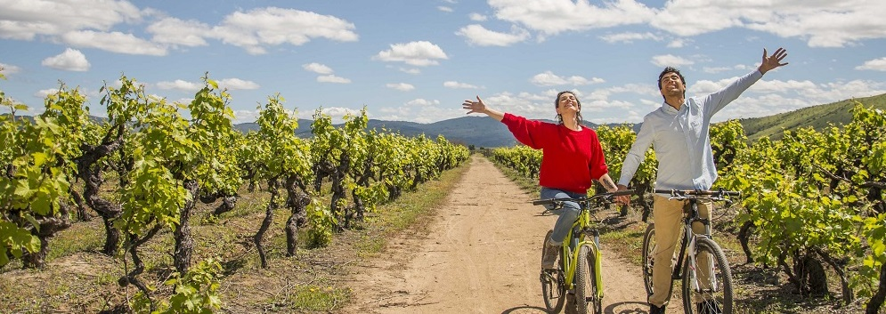 Mountain Bike and wine tours