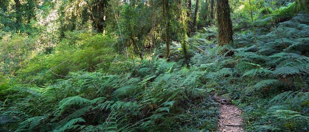senderos de naturaleza endémica en el Parque Tagua Tagua