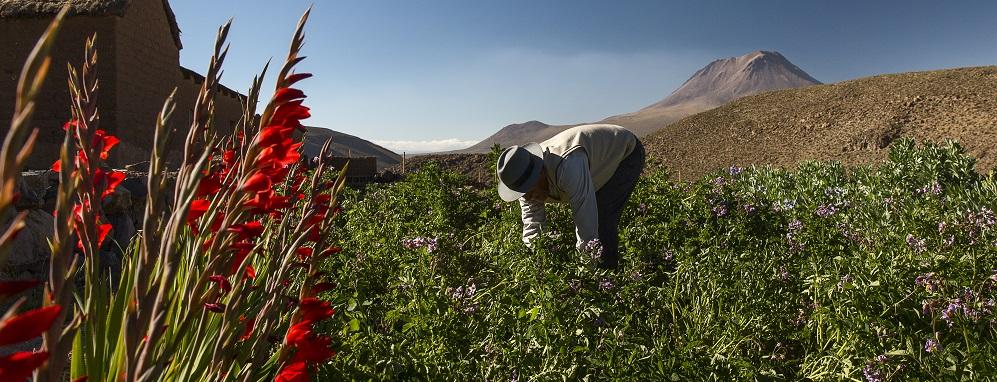 Lonely Planet Best in travel 2019 Valle de Elqui y su gente trabajando la tierra