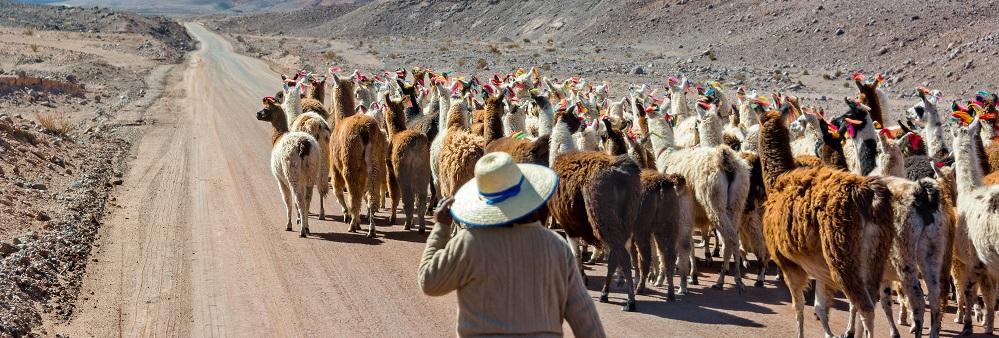 Visitar la flora y fauna del desierto es un imperdible de qué hacer en San Pedro de Atacama