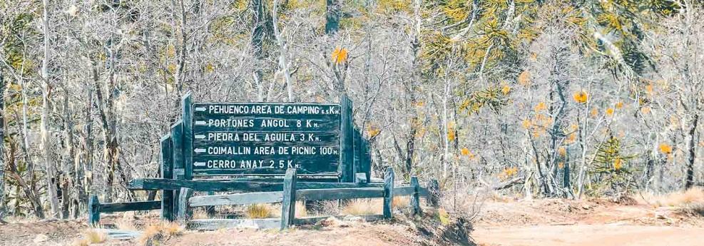 Senderos para hacer trekking en el Parque Nacional Nahuelbuta