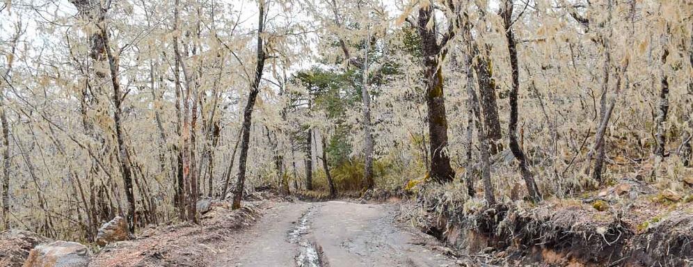 Camino para el trekking en el Parque Nacional Nahuelbuta