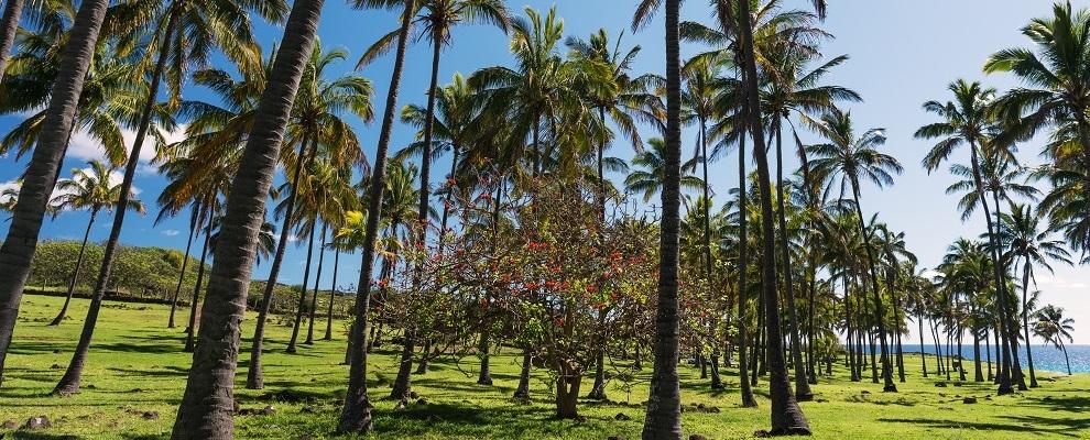 Visitar la playa Anakena en un viaje a Rapa Nui