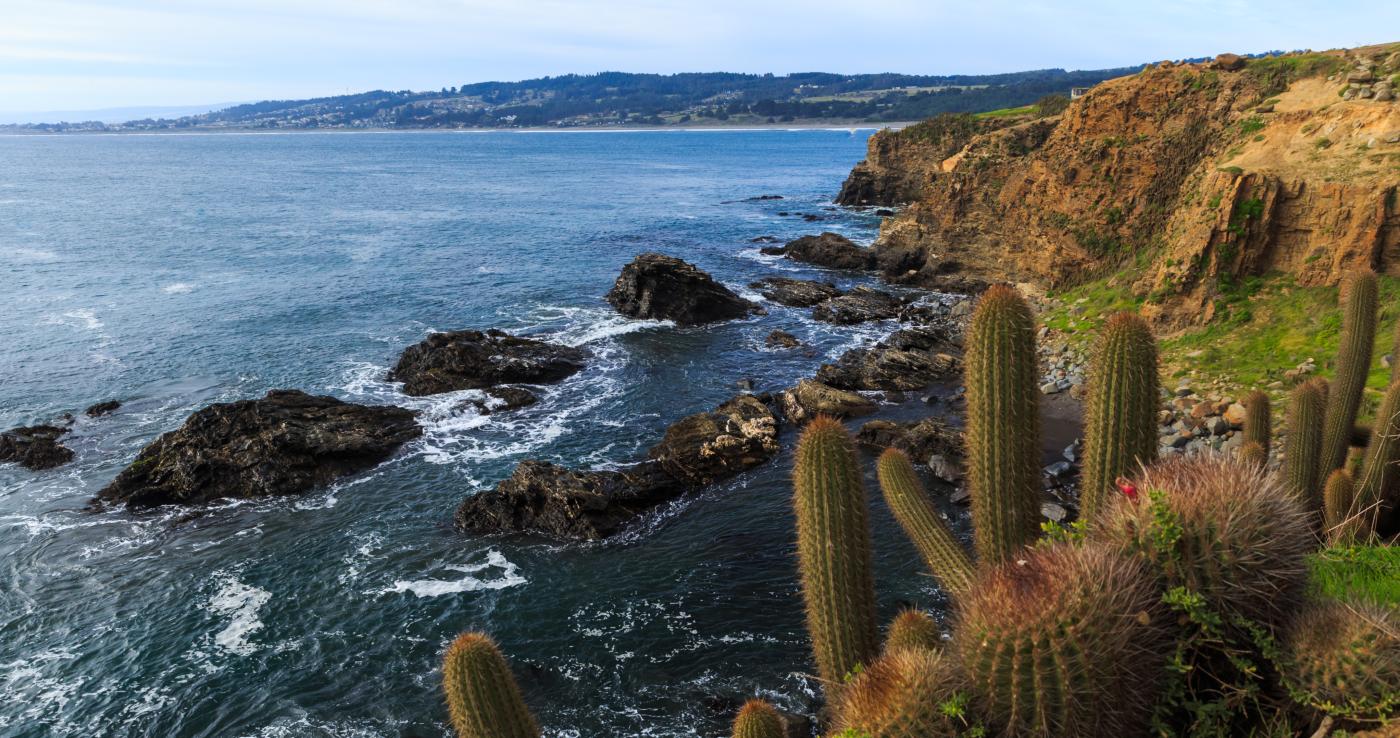 Imagen de un acantilado de la playa de Pichilemu donde se muestra el mar y su flora autóctona